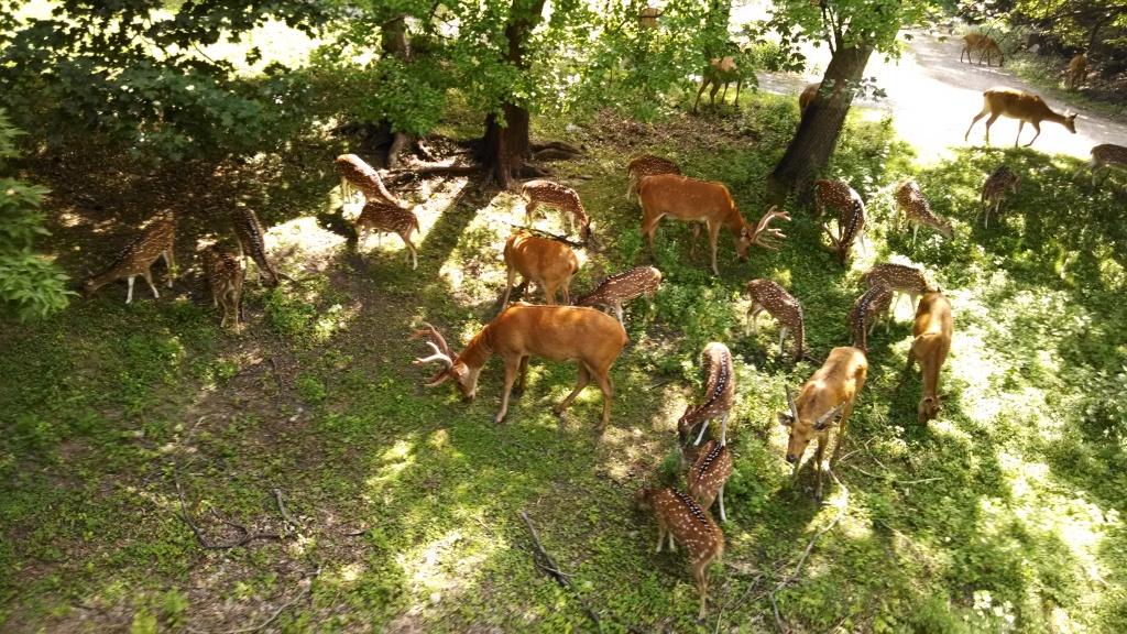 Deer - Wild Asia