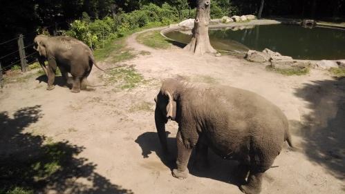 Elephants - Wild Asia
