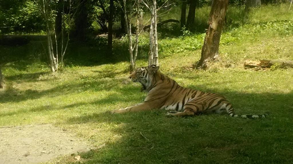 Tiger Mountain 2