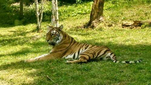 Tiger Mountain 3