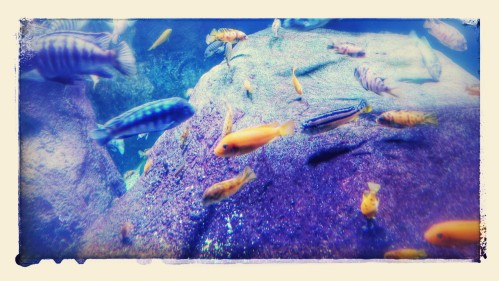 Fish NY Aquarium